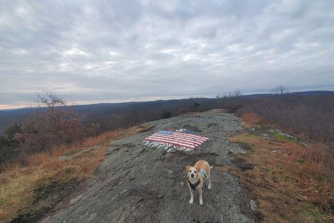 Dogstagram, Dogs taken hiking, not prepared