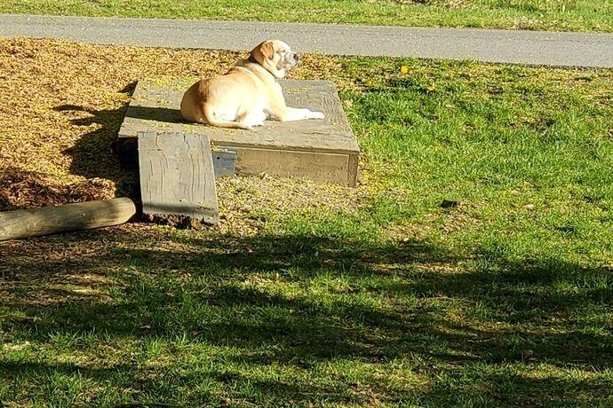 dog sun bathing, dog portrait relaxing in the sun, dog dreaming